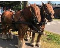 Kør i Hestevogn til Sankt Hansbål i Sjelle